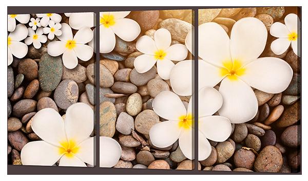 Модульная картина Белоснежные цветы на камнях