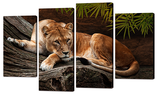 Модульная картина Усталая львица