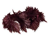 Шисо листья фиолетовые свежие