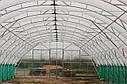 Плотная фермерская теплица под пленку 10х60 (шаг 2,5 м) Фермер Профи, фото 6