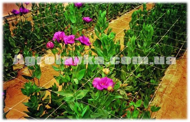 Сетка шпалерная белая (цветочная)