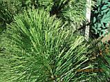 Сосна светло-зелёная распушенная искусственная, фото 4