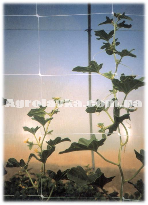 Сетка шпалерная белая 1,2х1000м, HORTINET 13FH (Италия), шпалера для цветов, фото 1