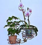 Коло, підставка для квітів на 2 чаші, фото 3