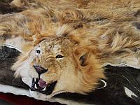 Настоящая шкура льва, ковер шкура из африканского льва, купить шкуру короля зверей