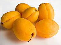 Саженцы абрикоса Ананасный желтый