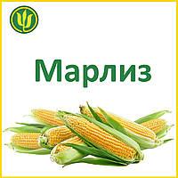 Семена кукурузы Марлиз (ФАО 280) - МАИС 2017 г.у