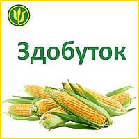 Семена кукурузы Здобуток (ФАО 290) Маис 2017 г.у
