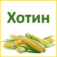 Семена кукурузы ДБ Хотин - ФАО 250