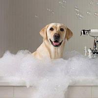 Шампуни для собак и щенков и средства по уходу за кожей