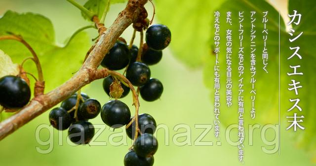 Ogaland Blueberry черная смородина