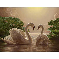 """Картина по номерам """"Пара лебедей"""" 40х50 см."""