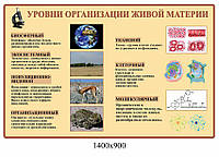 Стенд Уровни организаций живой материи (беж)