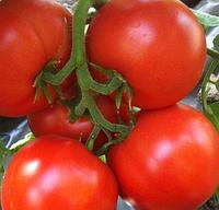 Насіння томату Айваз 331 F1 | Ayvaz 331 (500 н)