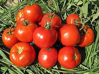 Насіння томату Імран F1 / Imran (500н)