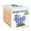 Экокуб Незабудка Forget-me-not