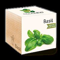 Экокуб Базилик Basil