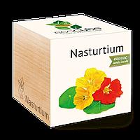 Экокуб Настурция Nasturtium