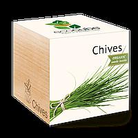 Экокуб Зелений лук Chives