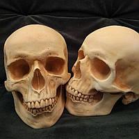 Модель черепа человека, из гипса, для тематического декорирования, в натуральную величину, фото 1