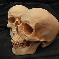 Череп человека, модель из гипса, для тематического декорирования, в натуральную величину