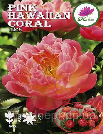 Пион травянистый Pink Hawaiian Coral