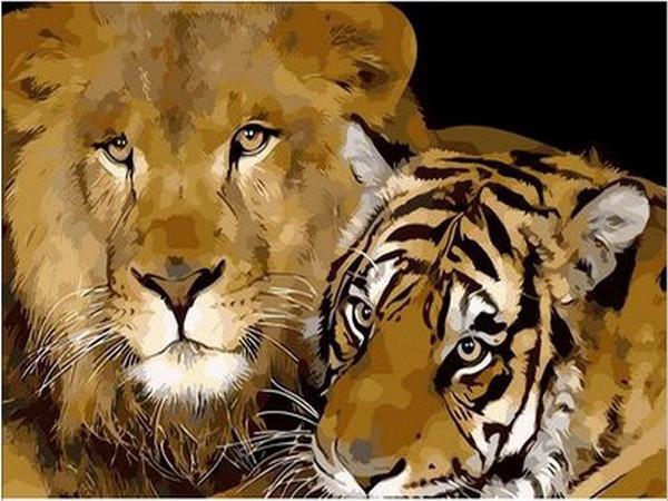 Картины по номерам 40×50 см. Лев и тигр