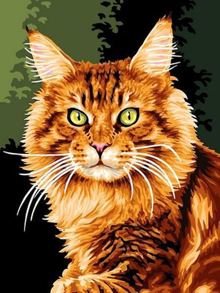 Картины по номерам 30×40 см. Рыжий кот
