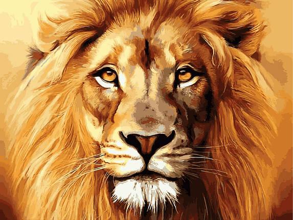 """VK100 Раскраска по номерам """"Гордый лев"""", фото 2"""