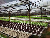 Культивирование овощных культур в современном тепличном хозяйстве
