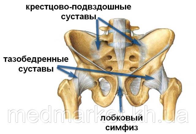 http://travmaorto.ru/files/image/hip/hip_pain/11.jpg