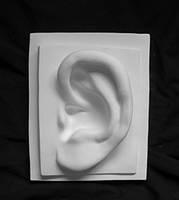 Гипсовая скульптура Правое ухо Давида 30 см