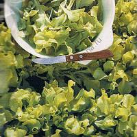 Семена салата Австралийский