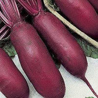 Семена столовой свеклы Атаман