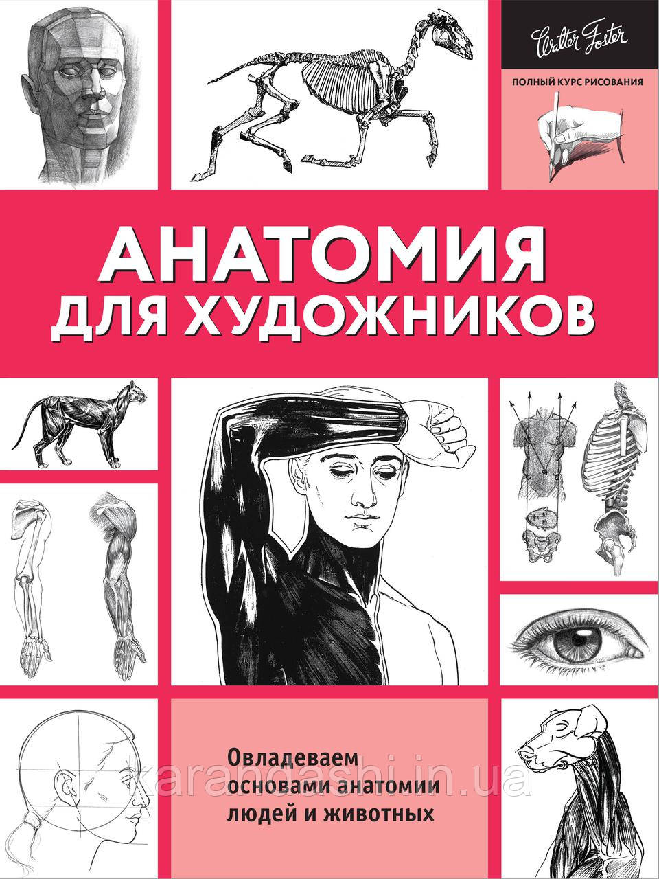 Анатомия для художников Полный курс рисования