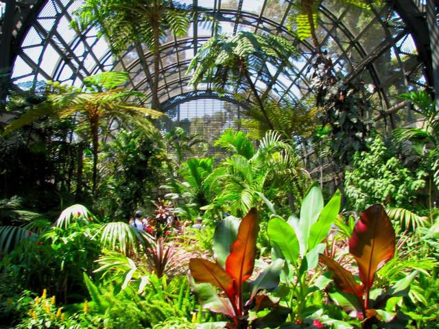 Семена комнатных и экзотических растений