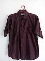 Рубашка мужская бордовая полоска