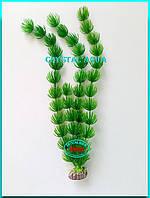 Растение 36см №1