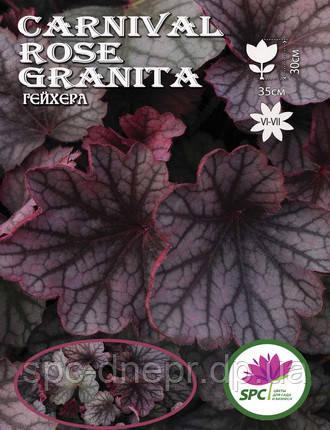 Гейхера Carnival Rose Granita, фото 2