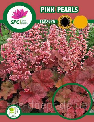 Гейхера Pink Pearls, фото 2