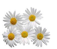 Экстракт цветков Ромашки 100 мл. / 1 л