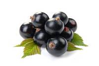 Экстракт ягод черной смороды 100 мл / 1л