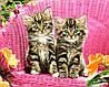 VP932  Набор-раскраска по номерам Зеленоглазые котята