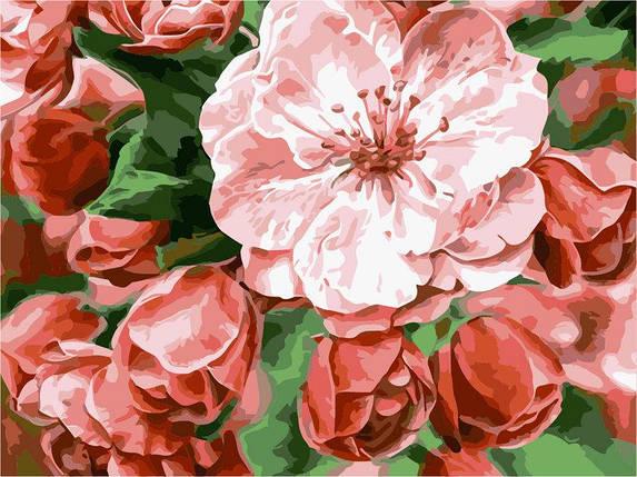 AS0239 Набор-раскраска по номерам Бархатные цветы, фото 2