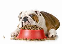 Корм для собак с ожирением