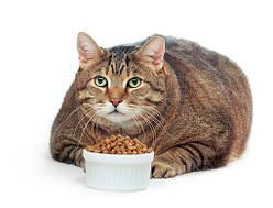 Корм для котов с лишним весом