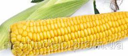 Семена кукурузы сахарной Старшайн F1 1 кг. Syngenta