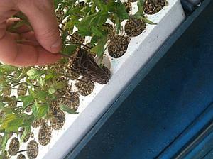 Кассета для рассады томатов КТ-160 518х325х52 мм