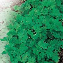 Насіння петрушки листова Гигантела оптом на вагу.