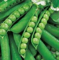 Семена гороха Альфа ( весовые от производителя)